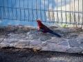 evans lookout oiseau coloré