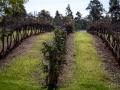 vignes tintillate estates 2