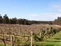 vignes tintillate estates 3