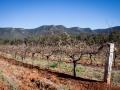 vignes tyrrells wines