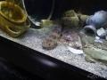 Manly Sea Life Sanctuary poisson bizarre