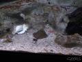 Manly Sea Life Sanctuary poissons et raie 2