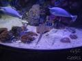 Manly Sea Life Sanctuary poissons et raie
