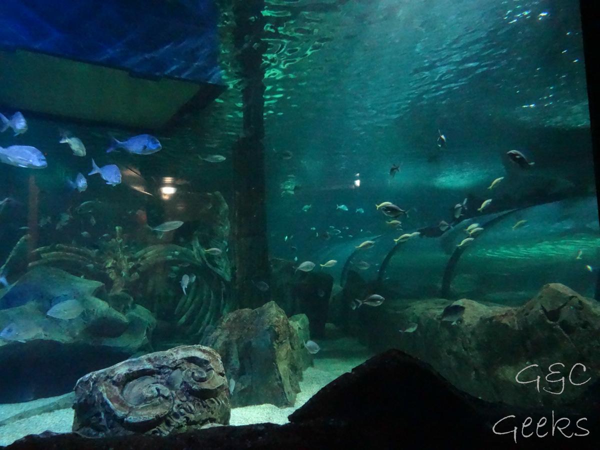 Sydney Sealife Aquarium avec les requins