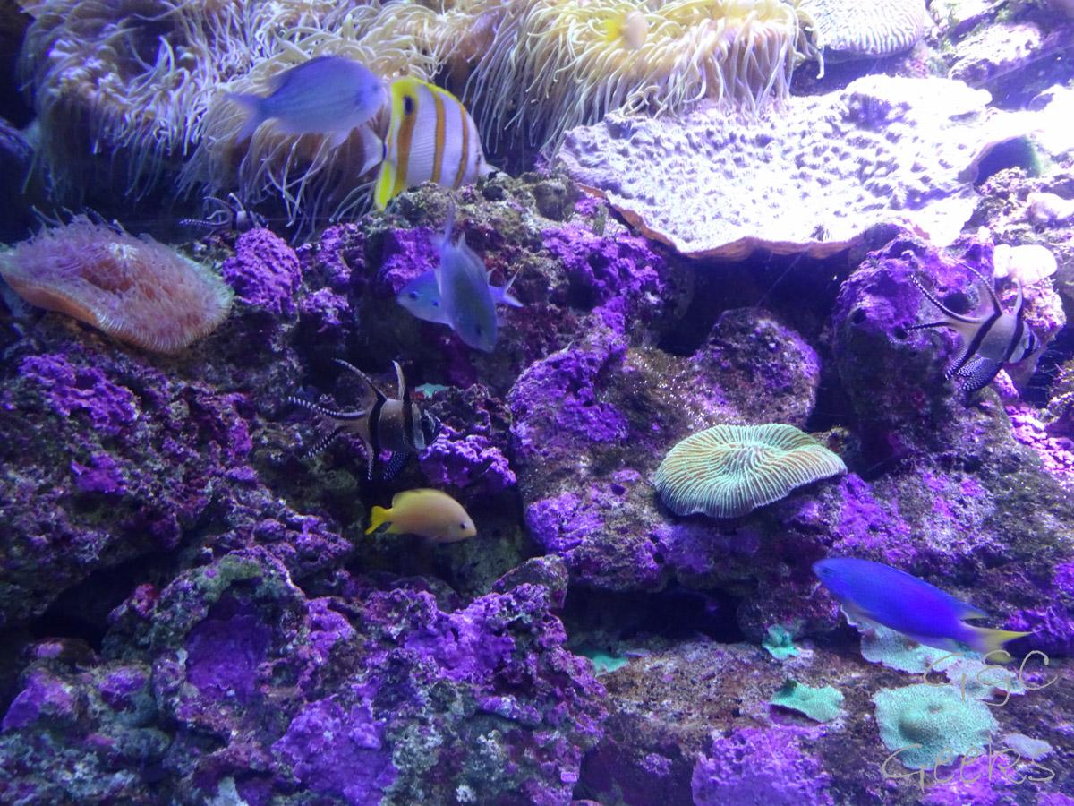 Sydney Sealife Aquarium poissons (2)