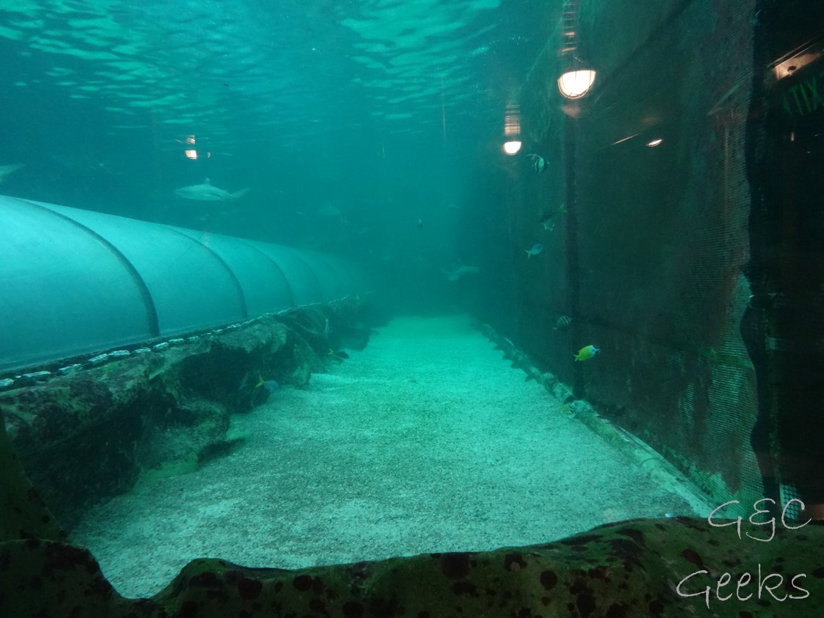 Sydney Sealife Aquarium poissons bassin