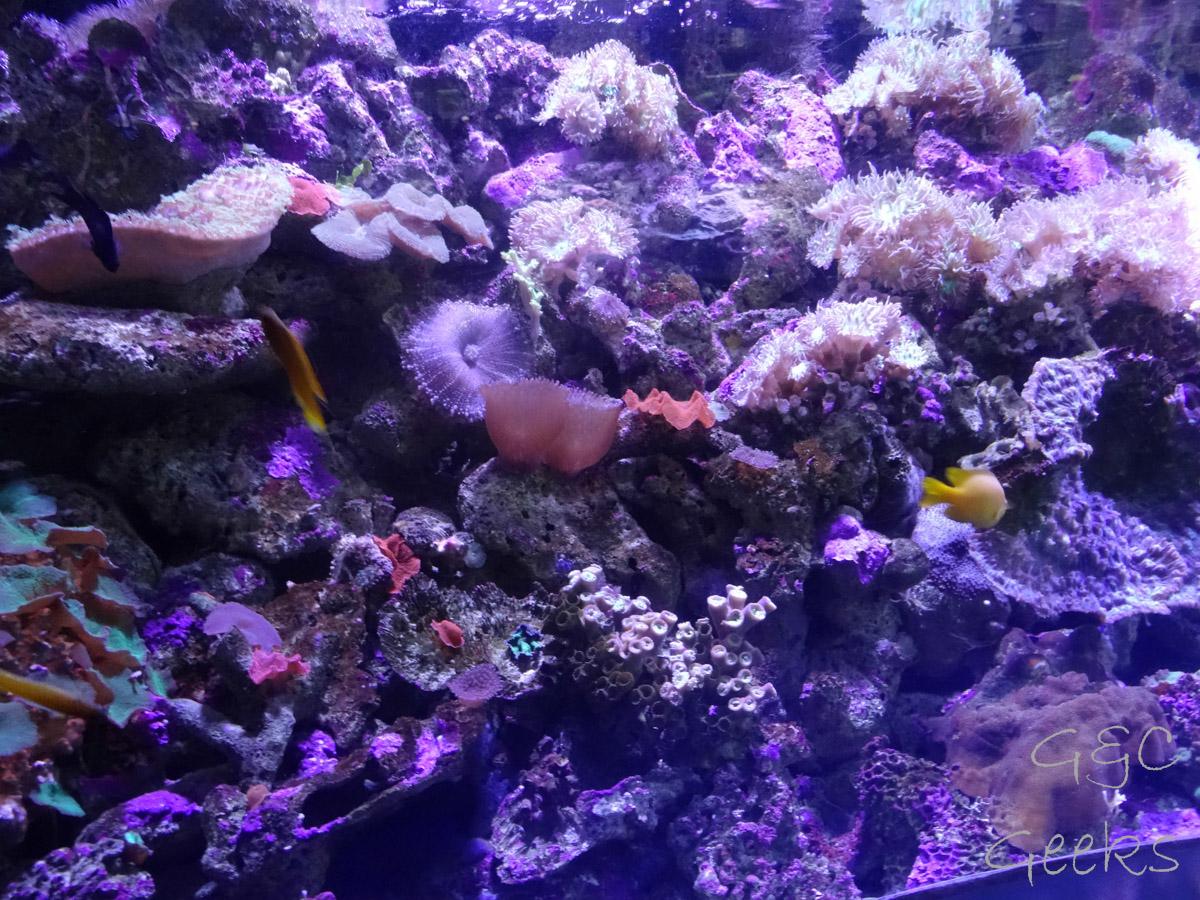 Sydney Sealife Aquarium poissons corail 2