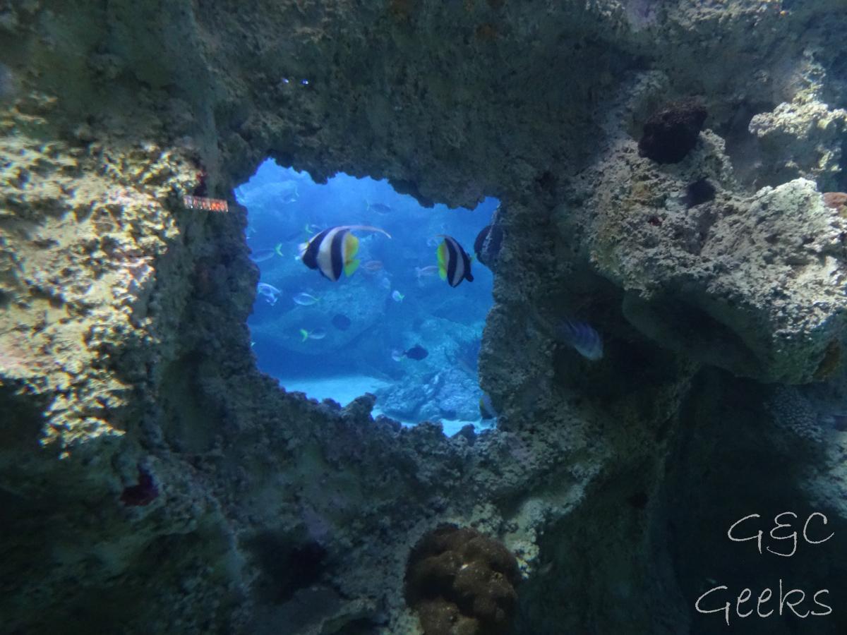Sydney Sealife Aquarium poissons noir blanc et jaune