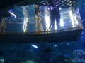 Sydney Sealife Aquarium dans la cage aux requins
