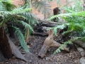 Wildlife Sydney Zoo Diable de Tasmanie 4