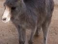 Wildlife Sydney Zoo Kangourou 5