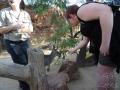Wildlife Sydney Zoo Kangourou et carole