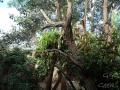 Wildlife Sydney Zoo Koala  9
