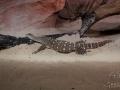 Wildlife Sydney Zoo crocodiles