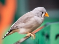 Wildlife Sydney Zoo oiseau 2