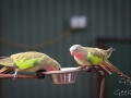 Wildlife Sydney Zoo oiseau 4