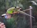 Wildlife Sydney Zoo oiseau 5