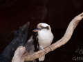 Wildlife Sydney Zoo oiseau 6