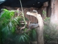 Wildlife Sydney Zoo serpent 2
