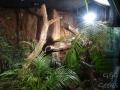 Wildlife Sydney Zoo serpent