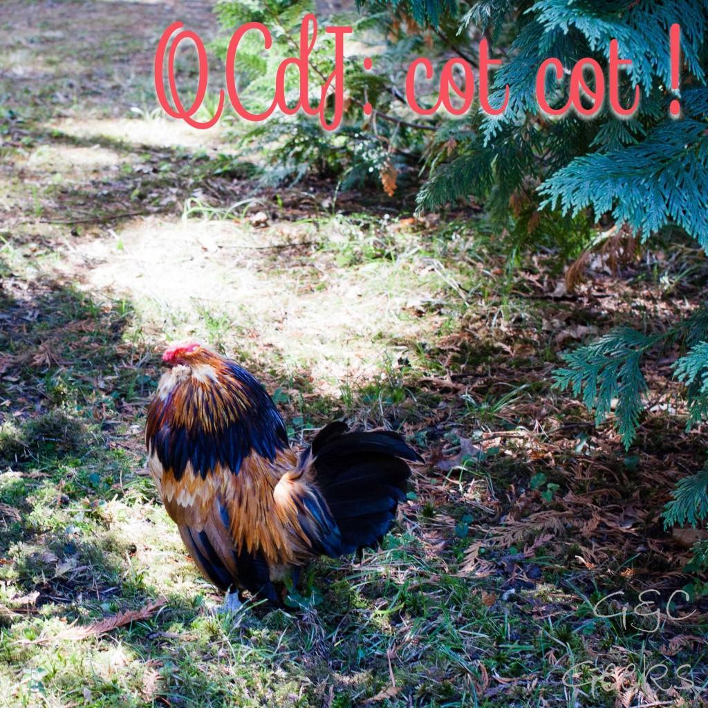 qcdj-poule