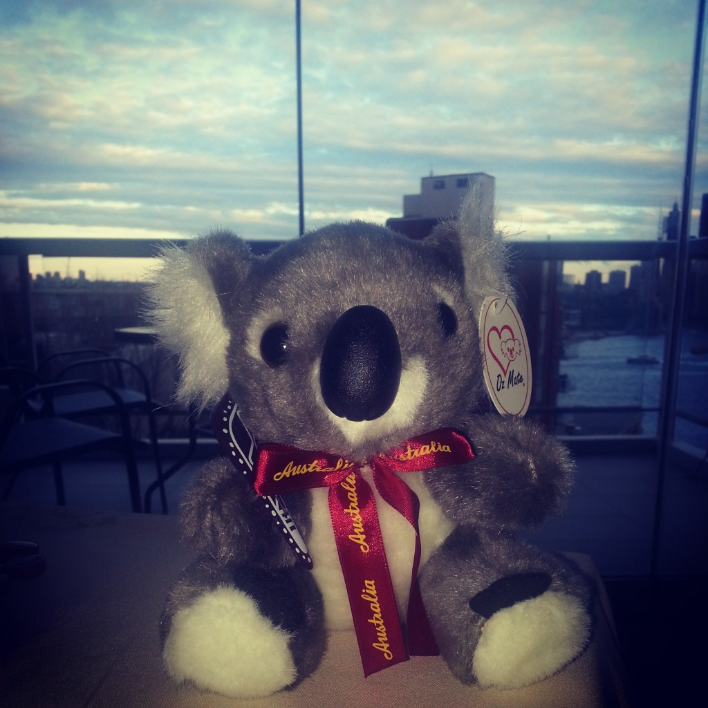 6-achat koala