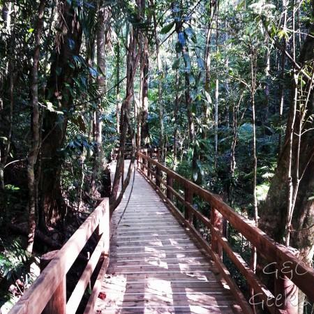 2-boardwalk dans les bois