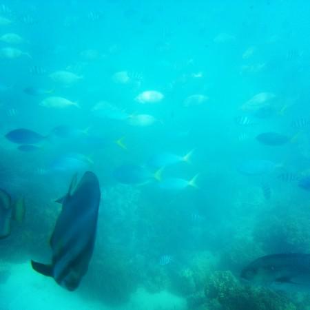 7-poissons sous l'eau