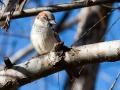 smith park oiseau dans un arbre