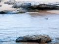 maroubra beach 7