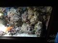 Sydney Sealife Aquarium corail et crabes