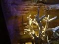 Sydney Sealife Aquarium corail et hippocampe très long