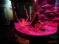 Sydney Sealife Aquarium crabes