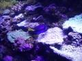 Sydney Sealife Aquarium dory