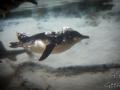 Sydney Sealife Aquarium pingouins et requins 5