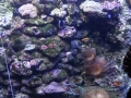 Sydney Sealife Aquarium poissons et corail