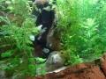 Sydney Sealife Aquarium poissons