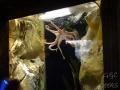 Sydney Sealife Aquarium poulpito