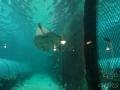 Sydney Sealife Aquarium raiemanta qui sourit