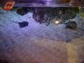 Sydney Sealife Aquarium raies mantas