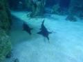 Sydney Sealife Aquarium requins feignants