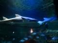 Sydney Sealife Aquarium requins pas content