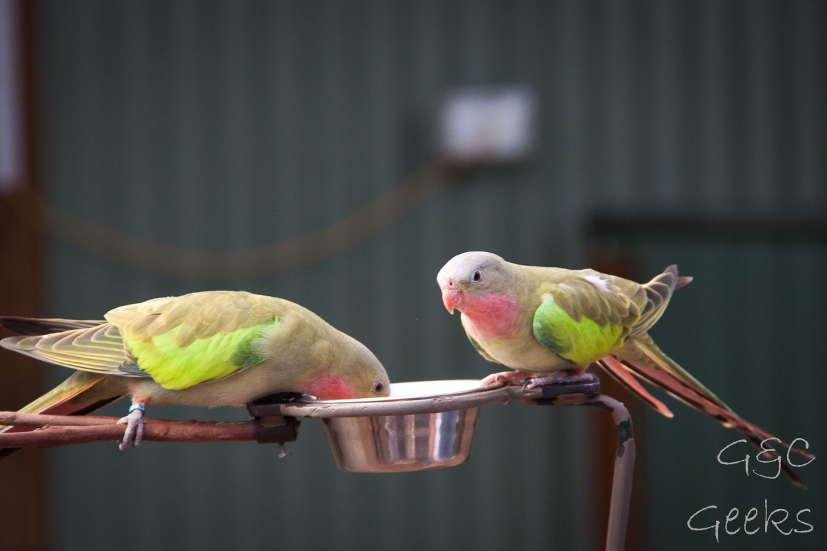 Wildlife Sydney Zoo oiseau 4