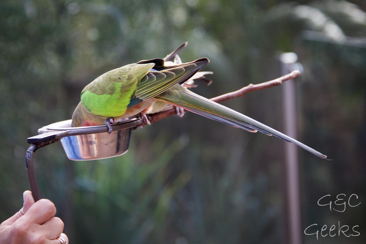 Wildlife Sydney Zoo oiseau 5