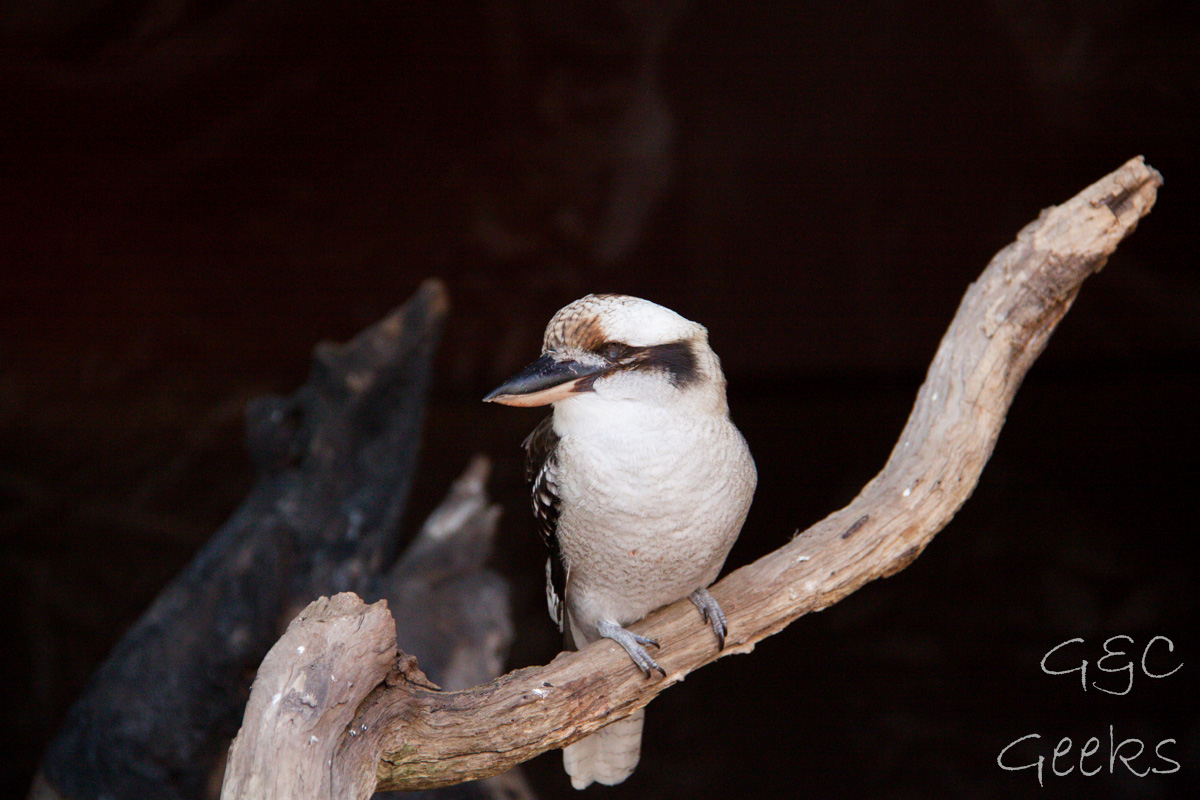 Wildlife Sydney Zoo oiseau 6