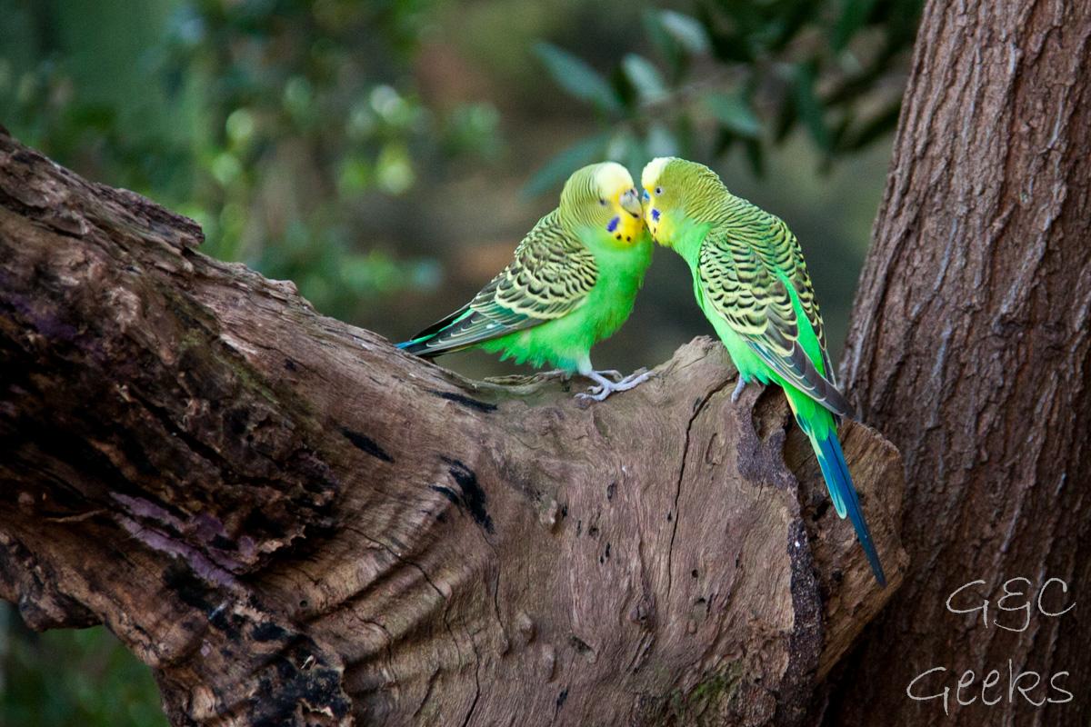 Wildlife Sydney Zoo oiseau 7