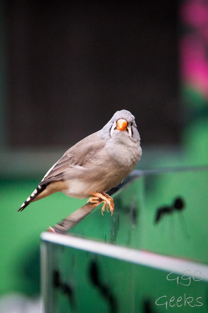 Wildlife Sydney Zoo oiseau