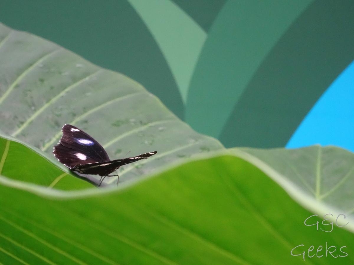Wildlife Sydney Zoo papillon 3