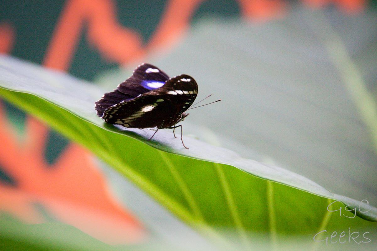 Wildlife Sydney Zoo papillon