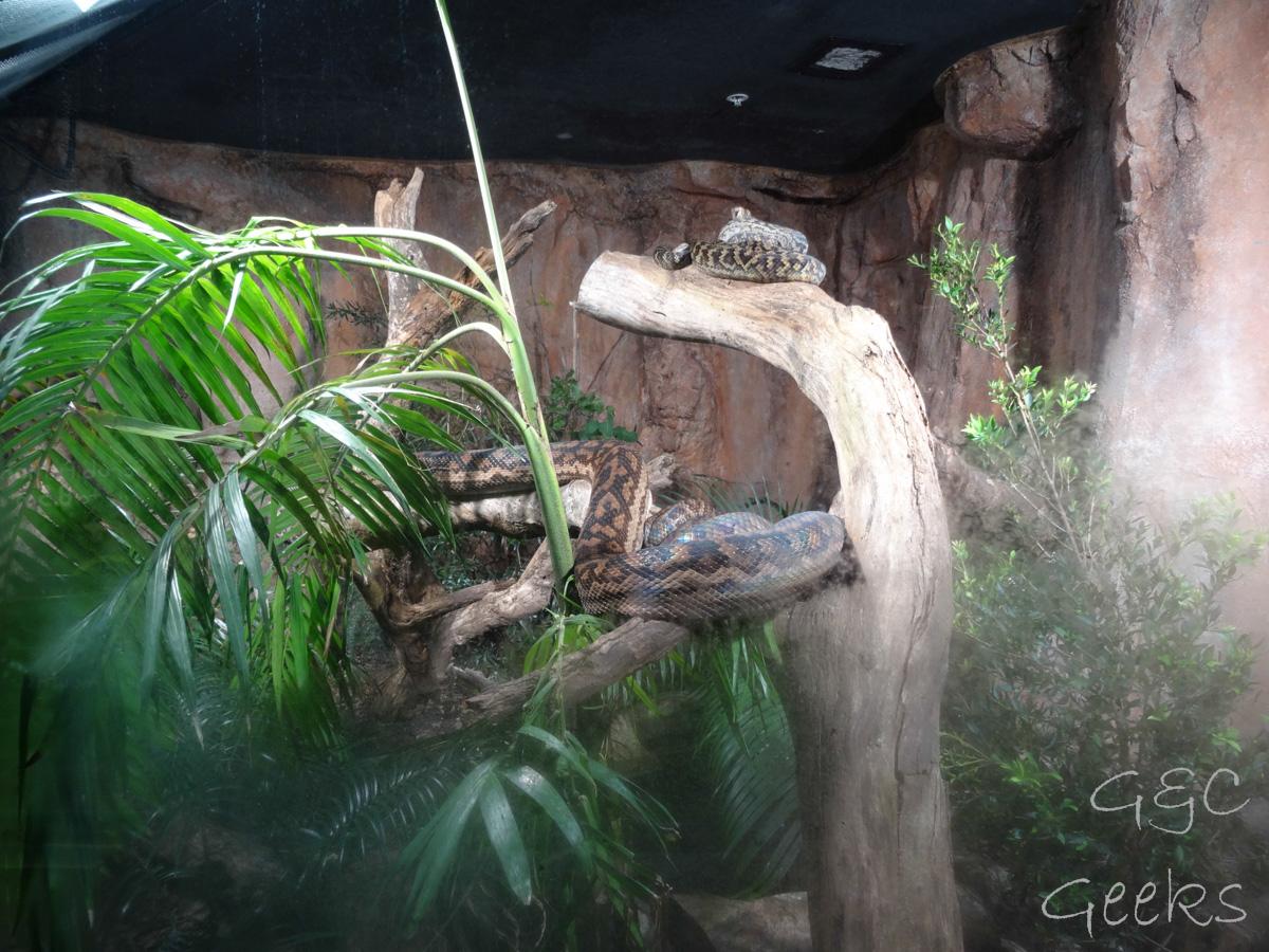 Wildlife Sydney Zoo serpent 2
